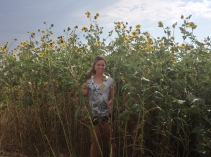 We're driving to Oklahoma and I, as a sunflower lover, went bug eyed for this little patch of tall and skinnies.
