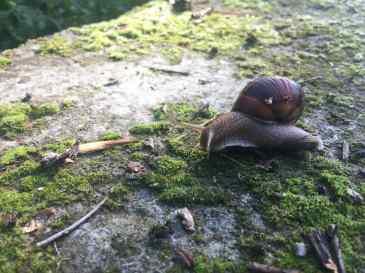 Snail life chose me.