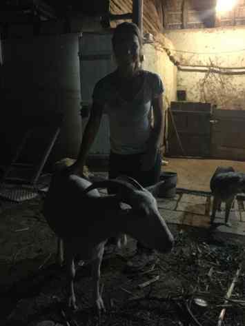 Goal #2: Melody milks a goat.